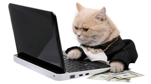 What Cats Can Teach us About SEO